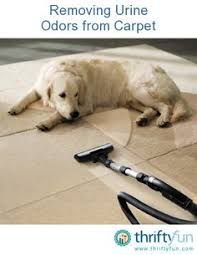 Dog Urine Odor Hardwood Floors by How To Remove Urine Smell From Hardwood Naturally Nontoxic