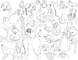 Download Zoo Coloring Pages Animal For Preschool Realistic Animals Games