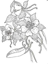 Columbine Flower Coloring Pages 5