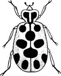 Bugs Black And White Clipart ClipArt Best