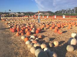 Pumpkin Patch Santa Barbara Ca by Underwood Farms Pumpkin Patch Find Your Perfect Pumpkin Where