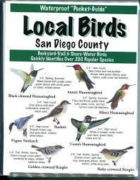 Local Birds Of San Diego County Inc Birds Images On Astonishing ... Sulphurcrested Cockatoo Birds In Backyards The Aussie Backyard Bird Count Melbourne Rainbow Lorikeet Apostlebird Welcome To Watching Birdscom Hosted By Watchers Birds Of The Garden Winter I Idenfication Chart Art 102 Best Unit Study Rources Images On Pinterest Nature Wild Unlimited Common Nest 144 For Feeders Crafts House Finch Audubon Field Guide Noisy Miner