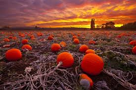 Canby Pumpkin Patch by Abandoned Pumpkin Field Somewhere Between Melancholy And The