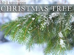 Christmas Tree Farm Lincoln Ne by Lakes Region New Hampshire Christmas Tree Farms Tree Wholesalers