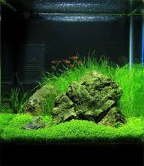 best 25 nano aquarium ideas on aqua aquarium nano