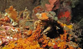 Decorator Crabs And Sea Sponges by What Lurks Below The Jetties Of Australia Australian Geographic