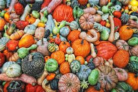Types Of Pumpkins And Squash by Fall Colors U201cgourds And Pumpkins U201d By Kevin Moore Gourds