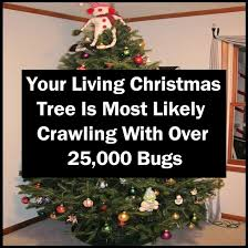 Christmas Tree Has Aphids by Your Living Christmas Tree Is Most Likely Crawling With Over
