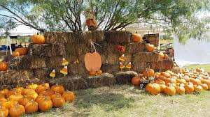 The Colony Tx Pumpkin Patch by The Pumpkin Patch San Antonio Home Facebook