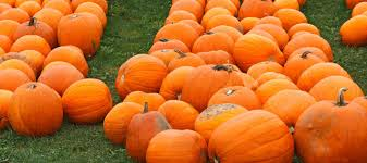 Best Pumpkin Picking Bergen County Nj by Where To Pick Pumpkins In And Around New York City Mommy Nearest