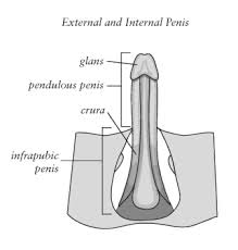 Pelvic Floor Tension Myalgia by Male Pelvic Fitness Our Greatest Wealth Is Health