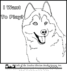 Husky Coloring Page Huskies Pages Siberian