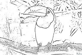 Toucan Bird Coloring Page DiyWordpressme