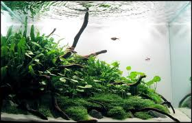 Aquascape Of The Month October 2009: