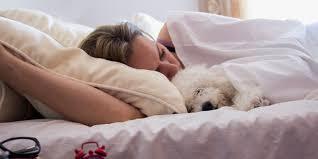 sollte ich meinen hund im bett schlafen lassen
