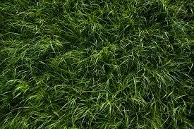 Deep Green Grass Texture