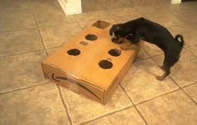 We Started With Cardboard To Prototype Ripley Doesnt Seem Mind Not Seeing The Ball But Its Harder For Others See Whats Going On And It Gets Beat