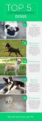 List Of Non Shedding Big Dogs by The Top 10 Low Maintenance Dogs Care Com Community