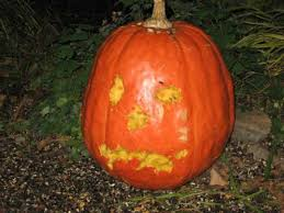 Pumpkin Carving With Drill by 12 Alternative Ways To Carve Your Pumpkin Pumpkins Jack O