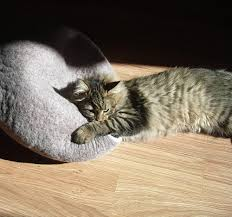 cat in house cat cave bed house igloo nap cocoon from wool felt home