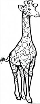 Free Giraffe Coloring Pages For Adults Christmas Cute Colouring Printable