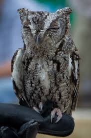 Owl Prowl Night Hike
