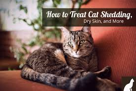 Excessive Hair Shedding In Cats by How To Treat Cat Shedding Dry Skin And More