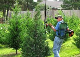What Christmas Tree To Buy by Buy Christmas Trees Early To Get Best Options Mississippi State