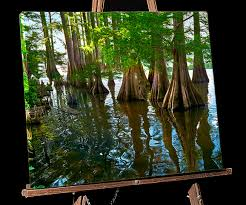 alligator bayou lake update louisiana lousiana bayou painting cypress trees lake providence alligator