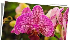 fleur et plante du lac des plantes fleuries pour donner des couleurs à votre intérieur