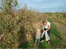 Pumpkin Picking Nj Near Staten Island by Where To Go Apple U0026 Pumpkin Picking 24 Best Spots In Tristate