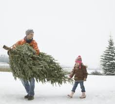 A Man Carrying Christmas Tree With His Daughter