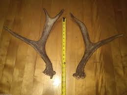 Moose Shed Antler Mounting Kit by Taxidermy Hunting Men
