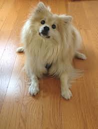 pets and your hardwood flooring