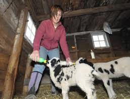 Betting On The Farm (with Photo Gallery) | The Daily Gazette Home Welcome To The Village Of Schoharie New York A Quaint Blog Farm Share Studio Corbin Hill Food Project By Policylink Lifting Up What Works Organic Farming 20something Vironmentalist Retail Specialty Agriculture Chamber Irene Courage Hope Mark Farm Life With Photo Gallery The County Cnyfresh Experts Say Valley Flooding Likely Increase Daily Businses Come On In Were Open Lakeside Farms Rules Favorite Cider Doughnut Poll