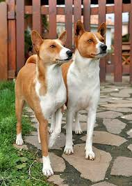 Cute Non Shedding Dog Breeds by Non Shedding Dogs