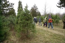Elgin Il Christmas Tree Farm by Cutting Your Own Christmas Tree A Fun Family Outing