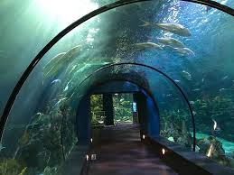Indoor Oceans The Aquarium at Moody Gardens Galveston Island
