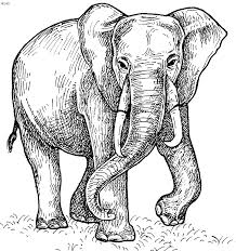 Realistic Asian Elephant Coloring Pages Animal Drawings