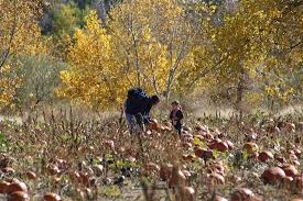 Colorado Pumpkin Patch Farm Camp by Ten Pumpkin Patches And Festivals To Carve Into Your Colorado