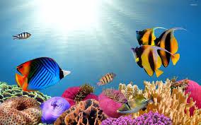 Tropical fish wallpaper Animal wallpapers