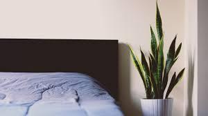 4 zimmerpflanzen die gesunden schlaf fördern schlafzimmer