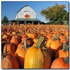 Big Orange Pumpkin Patch Celina Texas by 135 Best Pumpkin Farm Market Images On Pinterest Pumpkin Farm