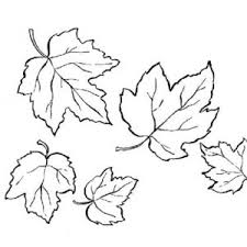 Maple Tree Leaves Coloring Pages