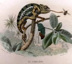 Basking Lamp For Chameleon by The Ultimate Chameleon Care Guide Reptiles Guru