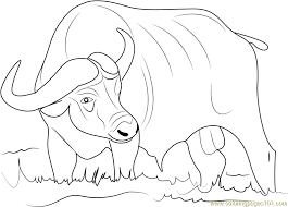Asiatic Buffalo Coloring Page