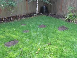 The Oregon Economics Blog: Economist's Notebook: The Economics Of ... How To Get Rid Of Moles Organic Gardening Blog Cat Captures Mole In My Neighbors Backyard Youtube Animal Wikipedia Identify And In The Garden Or Yard Daily Home Renovation Tips Vs The Part 1 Damaging Our Lawn When Are Most Active Dec 2017 Uerstanding Their Behavior Mole Gassing Pests Get Correct Remedy Liftyles Sonic Molechaser Alinum Covers 11250 Sq Ft Model 7900