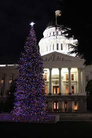 Does Aspirin Work For Christmas Trees by Medusa U0027s Kitchen December 2014
