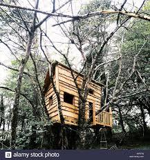 100 Tree House Studio Wood Childrens Treehouse At Tom Raffields Studio Stock Photo