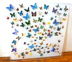 Butterfly Burst Framed Art Pictures Display
